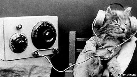 radiocatgettyimg
